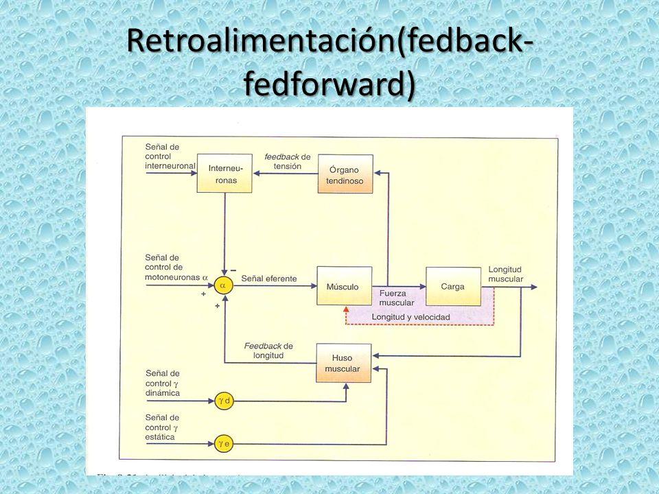 Sistema de retroalimentación Permite que se provea de información durante todo el desarrollo del movimiento.