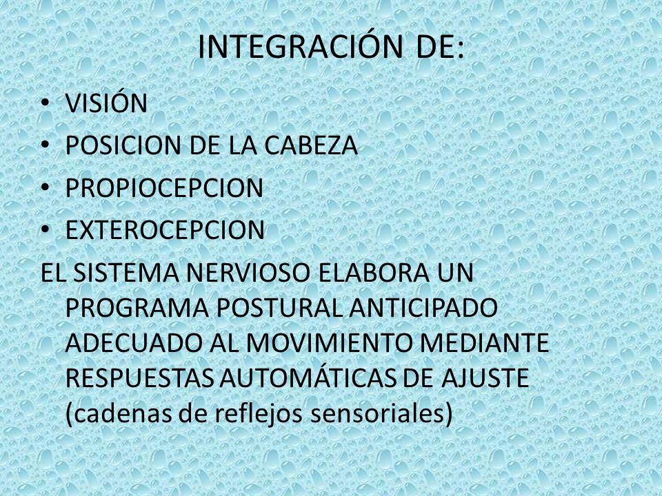 INTEGRACIÓN DE: VISIÓN POSICION DE LA CABEZA PROPIOCEPCION EXTEROCEPCION EL SISTEMA NERVIOSO ELABORA UN PROGRAMA POSTURAL ANTICIPADO ADECUADO AL MOVIMIENTO MEDIANTE RESPUESTAS AUTOMÁTICAS DE AJUSTE (cadenas de reflejos sensoriales)