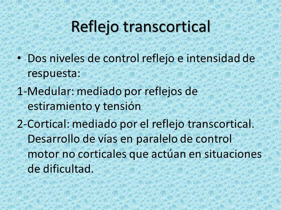 Reflejo transcortical Dos niveles de control reflejo e intensidad de respuesta: 1-Medular: mediado por reflejos de estiramiento y tensión 2-Cortical: mediado por el reflejo transcortical.