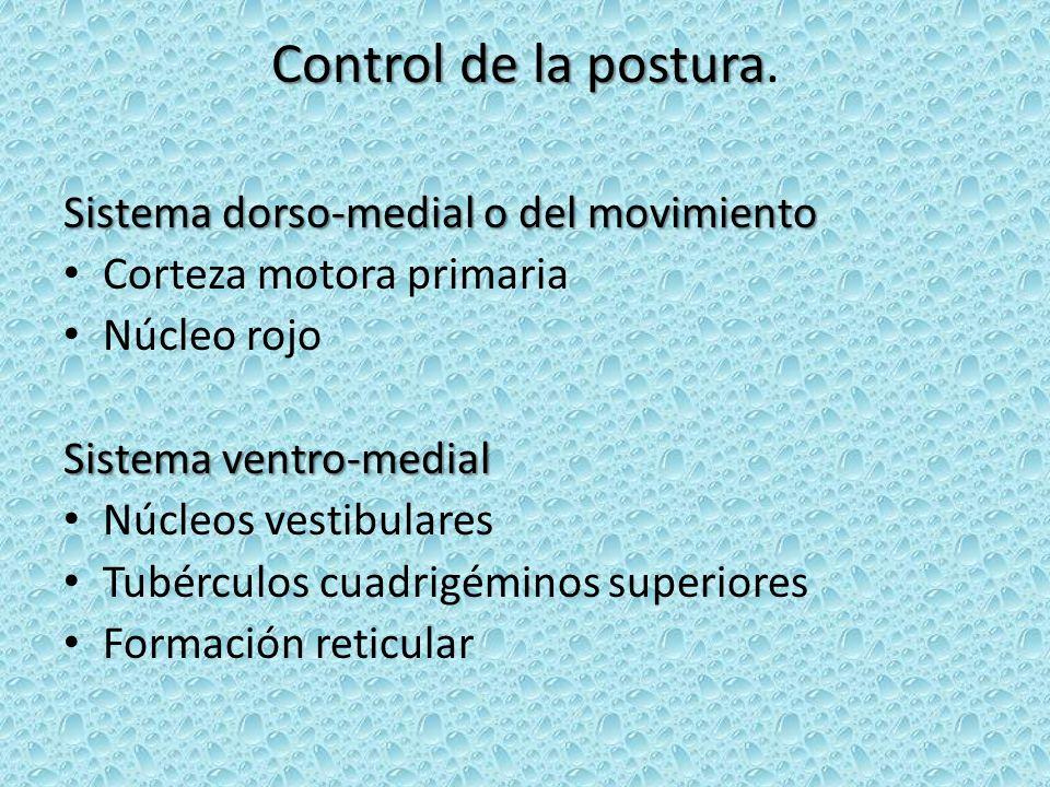 Control de la postura Control de la postura. Sistema dorso-medial o del movimiento Corteza motora primaria Núcleo rojo Sistema ventro-medial Núcleos v