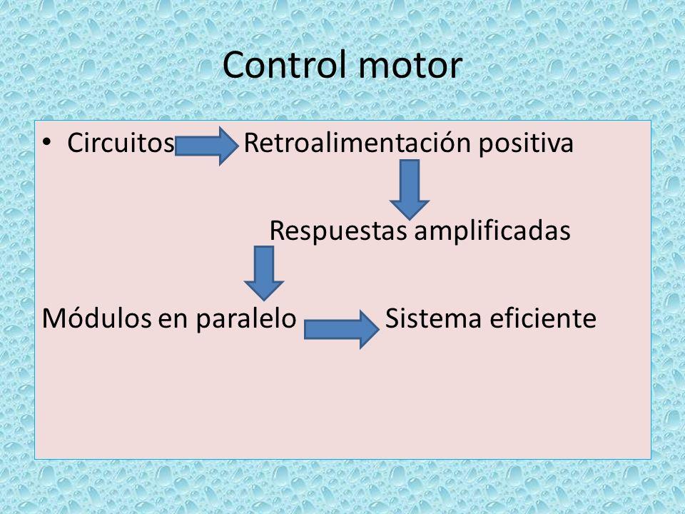 Control motor Circuitos Retroalimentación positiva Respuestas amplificadas Módulos en paralelo Sistema eficiente
