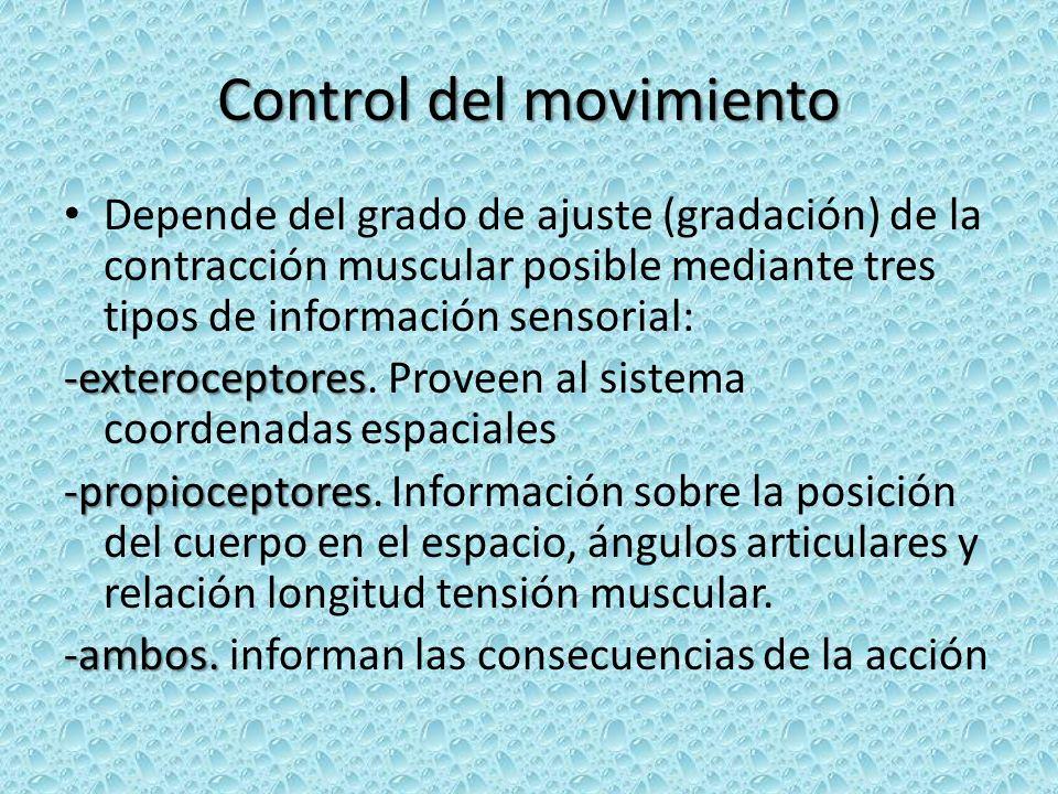 Control del movimiento Depende del grado de ajuste (gradación) de la contracción muscular posible mediante tres tipos de información sensorial: -exteroceptores -exteroceptores.