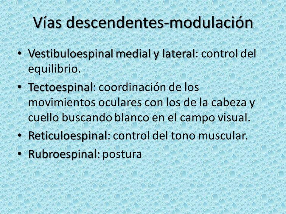 Vías descendentes-modulación Vestibuloespinal medial y lateral Vestibuloespinal medial y lateral: control del equilibrio. Tectoespinal Tectoespinal: c