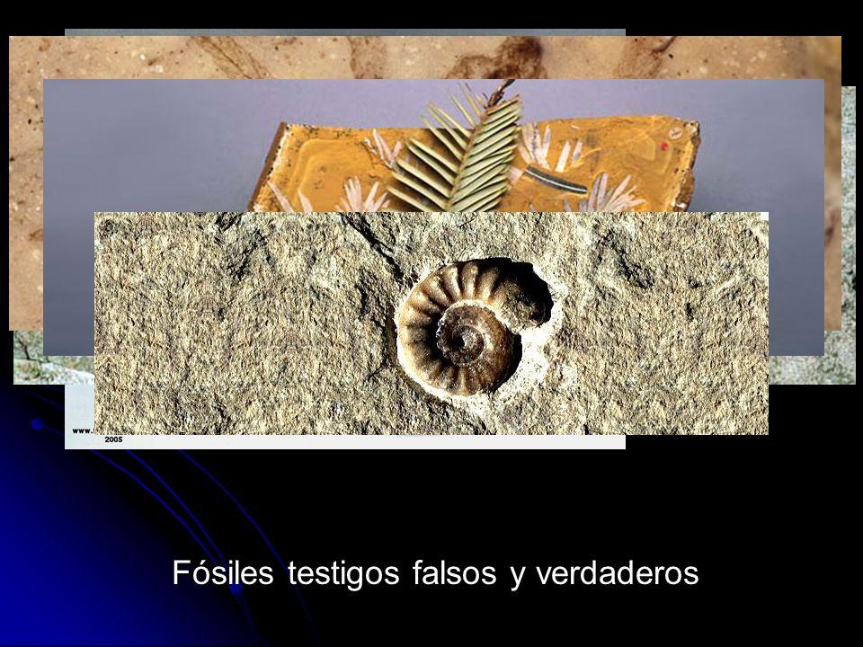 Fósiles testigos falsos y verdaderos