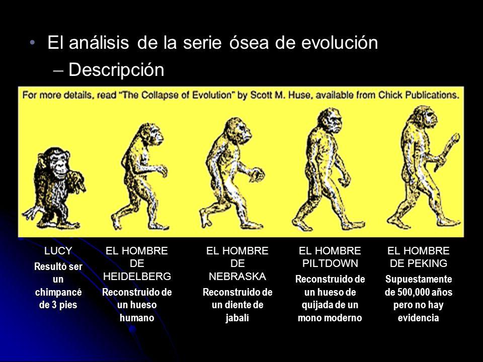 El análisis de la serie ósea de evoluciónEl análisis de la serie ósea de evolución –Descripción El análisis de la serie ósea de evoluciónEl análisis de la serie ósea de evolución –Descripción LUCY Resultó ser un chimpancé de 3 pies LUCY EL HOMBRE DE HEIDELBERG Reconstruido de un hueso humano EL HOMBRE DE HEIDELBERG Reconstruido de un hueso humano EL HOMBRE DE NEBRASKA Reconstruido de un diente de jabalí EL HOMBRE DE NEBRASKA Reconstruido de un diente de jabalí EL HOMBRE PILTDOWN Reconstruido de un hueso de quijada de un mono moderno EL HOMBRE PILTDOWN Reconstruido de un hueso de quijada de un mono moderno EL HOMBRE DE PEKING Supuestamente de 500,000 años pero no hay evidencia EL HOMBRE DE PEKING Supuestamente de 500,000 años pero no hay evidencia