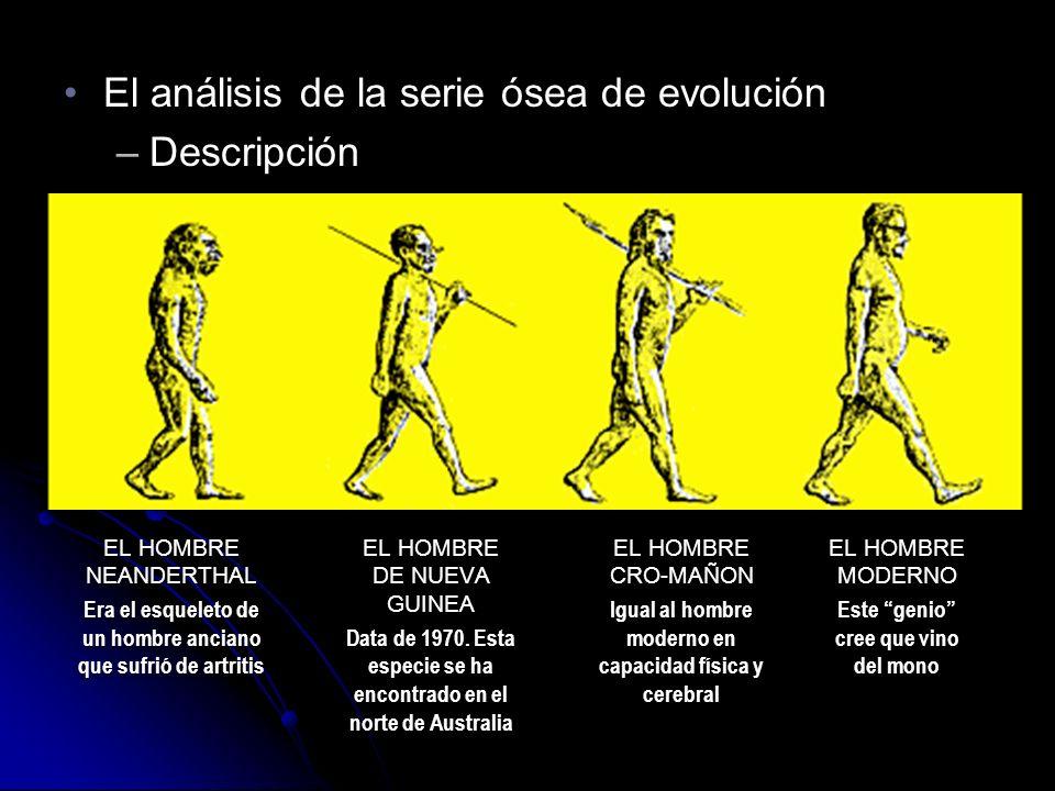 El análisis de la serie ósea de evoluciónEl análisis de la serie ósea de evolución –Descripción El análisis de la serie ósea de evoluciónEl análisis de la serie ósea de evolución –Descripción EL HOMBRE NEANDERTHAL Era el esqueleto de un hombre anciano que sufrió de artritis EL HOMBRE NEANDERTHAL Era el esqueleto de un hombre anciano que sufrió de artritis EL HOMBRE DE NUEVA GUINEA Data de 1970.