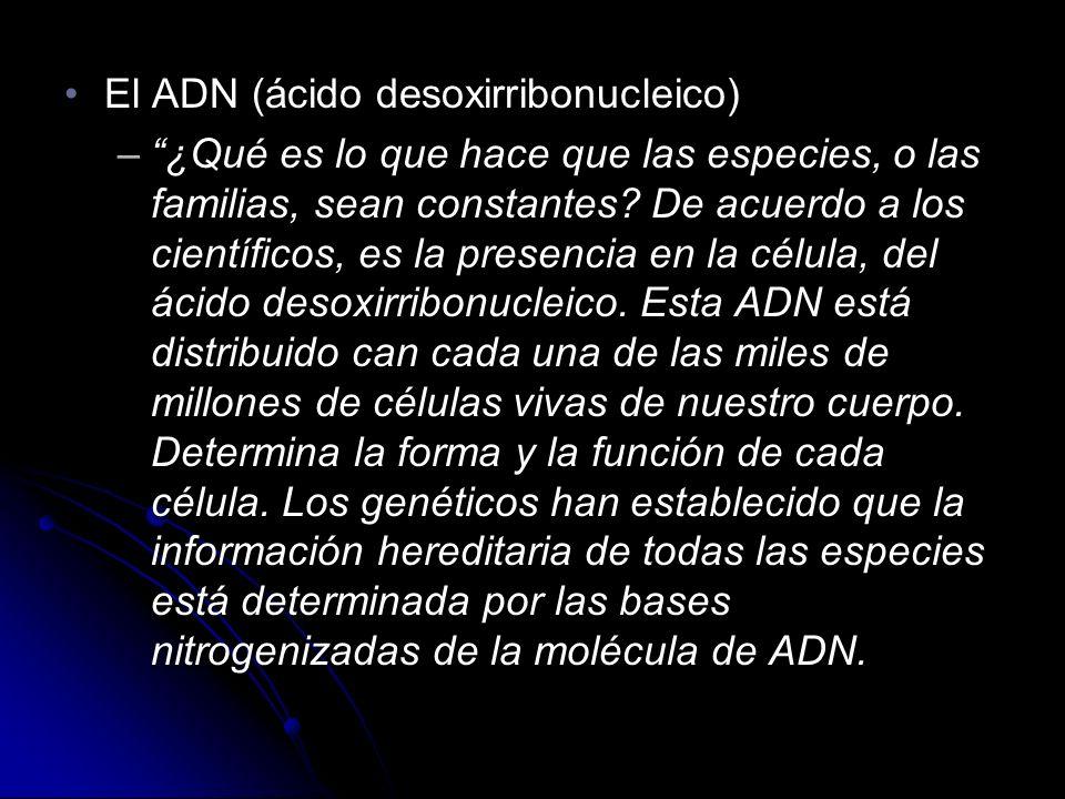 El ADN (ácido desoxirribonucleico)El ADN (ácido desoxirribonucleico) –¿Qué es lo que hace que las especies, o las familias, sean constantes.