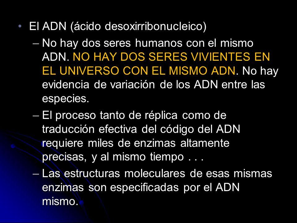 El ADN (ácido desoxirribonucleico)El ADN (ácido desoxirribonucleico) –No hay dos seres humanos con el mismo ADN.