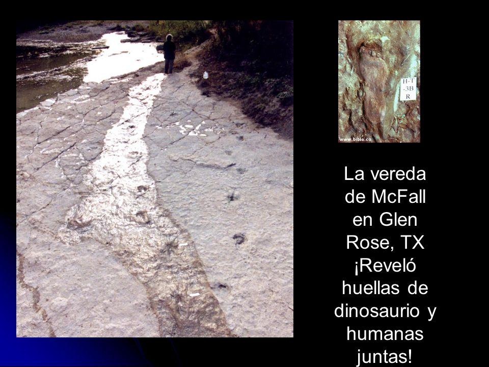 Los fósiles demuestran catástrofe, no progresión lenta La vereda de McFall en Glen Rose, TX ¡Reveló huellas de dinosaurio y humanas juntas!