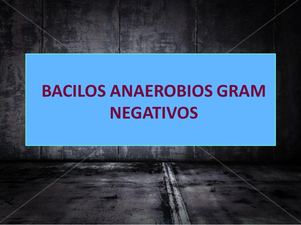 BACILOS ANAEROBIOS GRAM NEGATIVOS