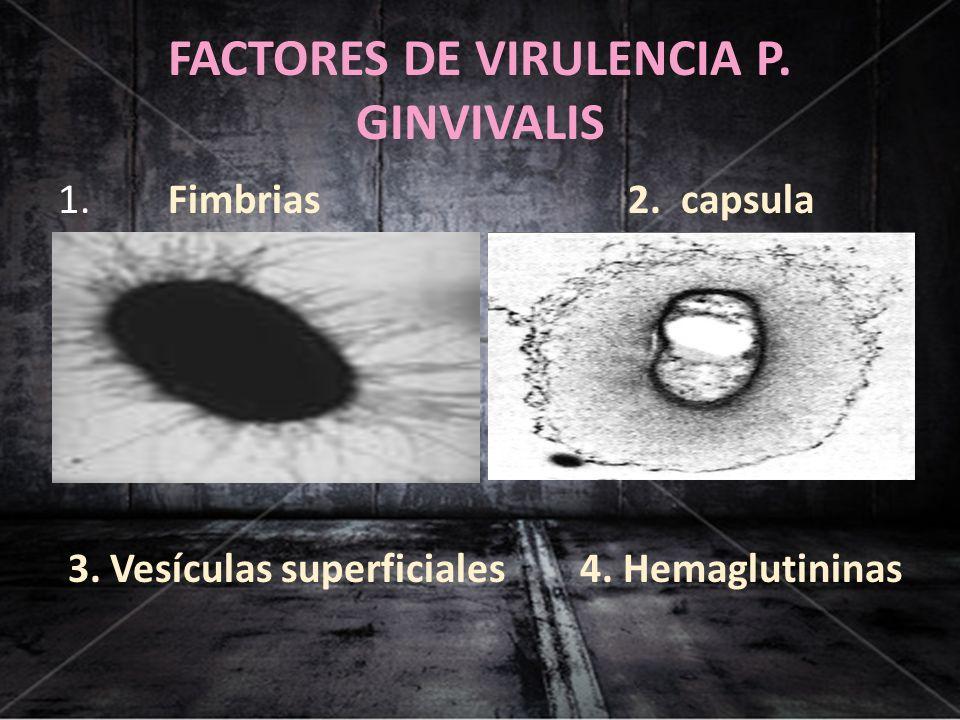 FACTORES DE VIRULENCIA P. GINVIVALIS 1. Fimbrias 2. capsula 3. Vesículas superficiales 4. Hemaglutininas