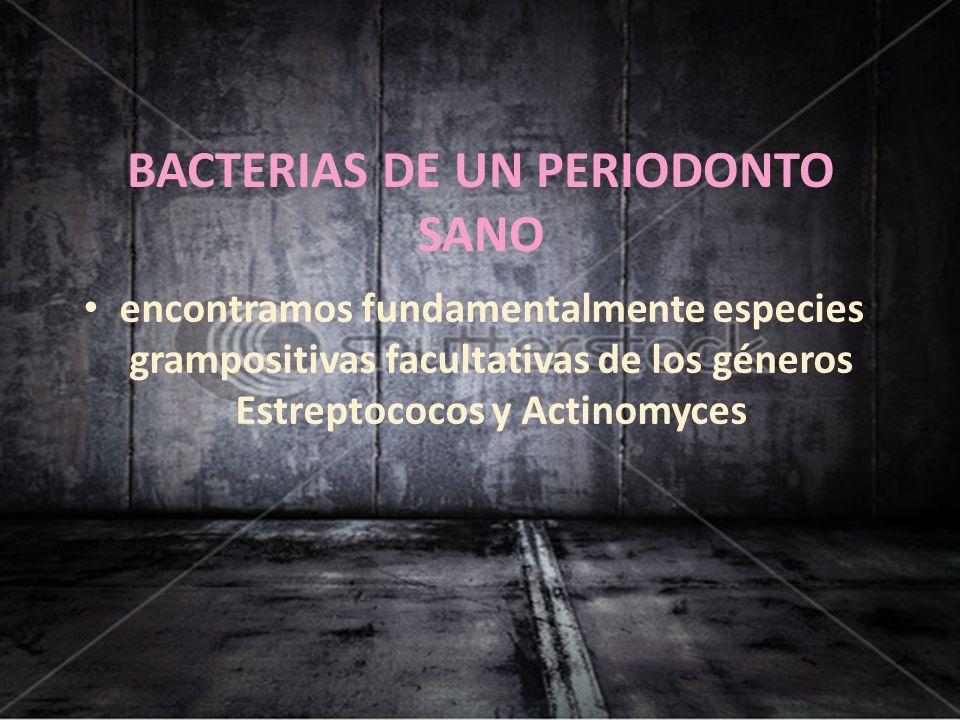 BACTERIAS DE UN PERIODONTO SANO encontramos fundamentalmente especies grampositivas facultativas de los géneros Estreptococos y Actinomyces