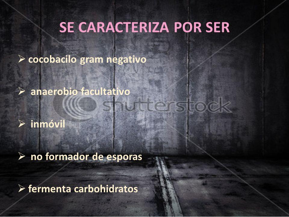 SE CARACTERIZA POR SER cocobacilo gram negativo anaerobio facultativo inmóvil no formador de esporas fermenta carbohidratos