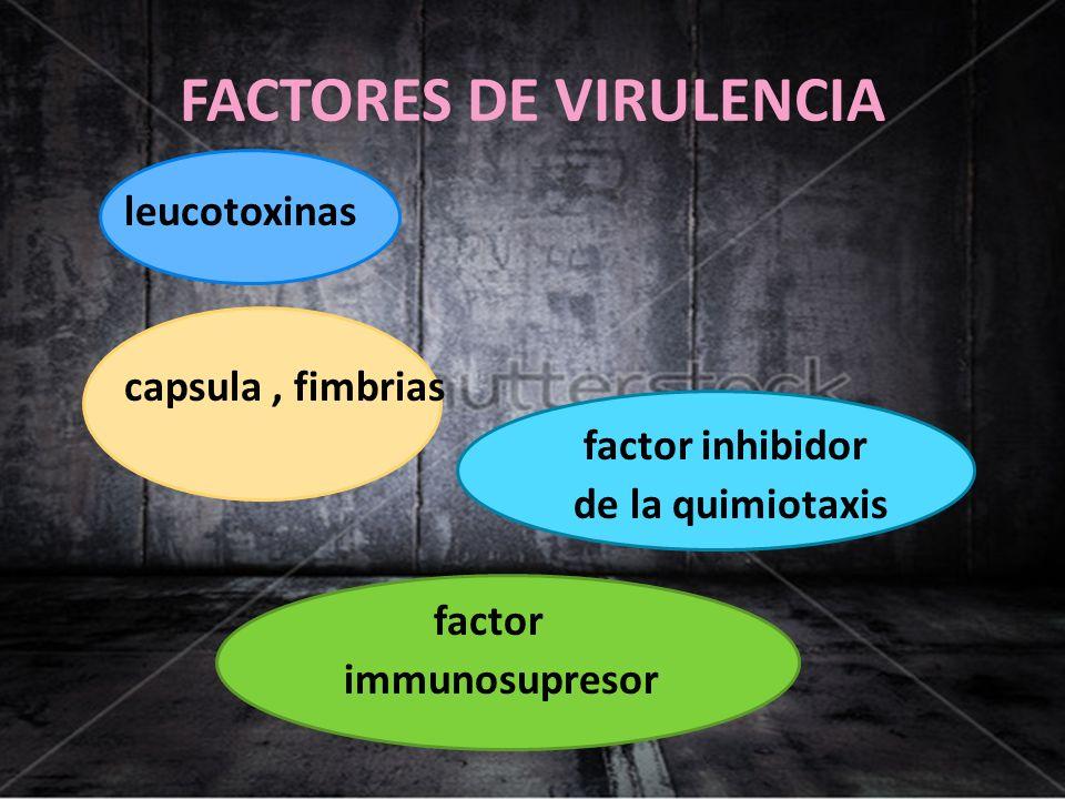 FACTORES DE VIRULENCIA leucotoxinas capsula, fimbrias factor inhibidor de la quimiotaxis factor immunosupresor