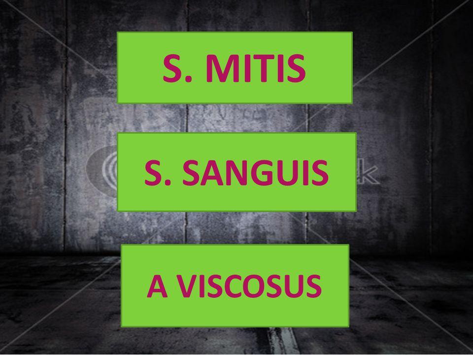 S. MITIS S. SANGUIS A VISCOSUS