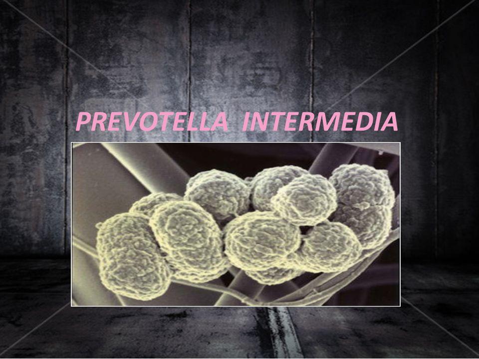PREVOTELLA INTERMEDIA