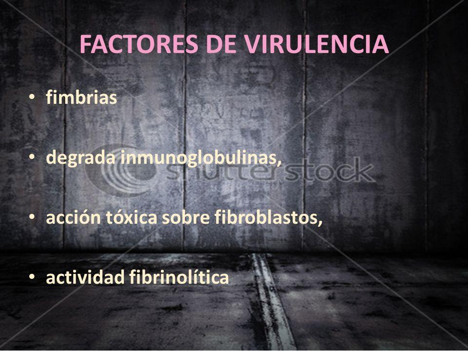 FACTORES DE VIRULENCIA fimbrias degrada inmunoglobulinas, acción tóxica sobre fibroblastos, actividad fibrinolítica