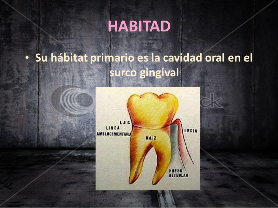 HABITAD Su hábitat primario es la cavidad oral en el surco gingival