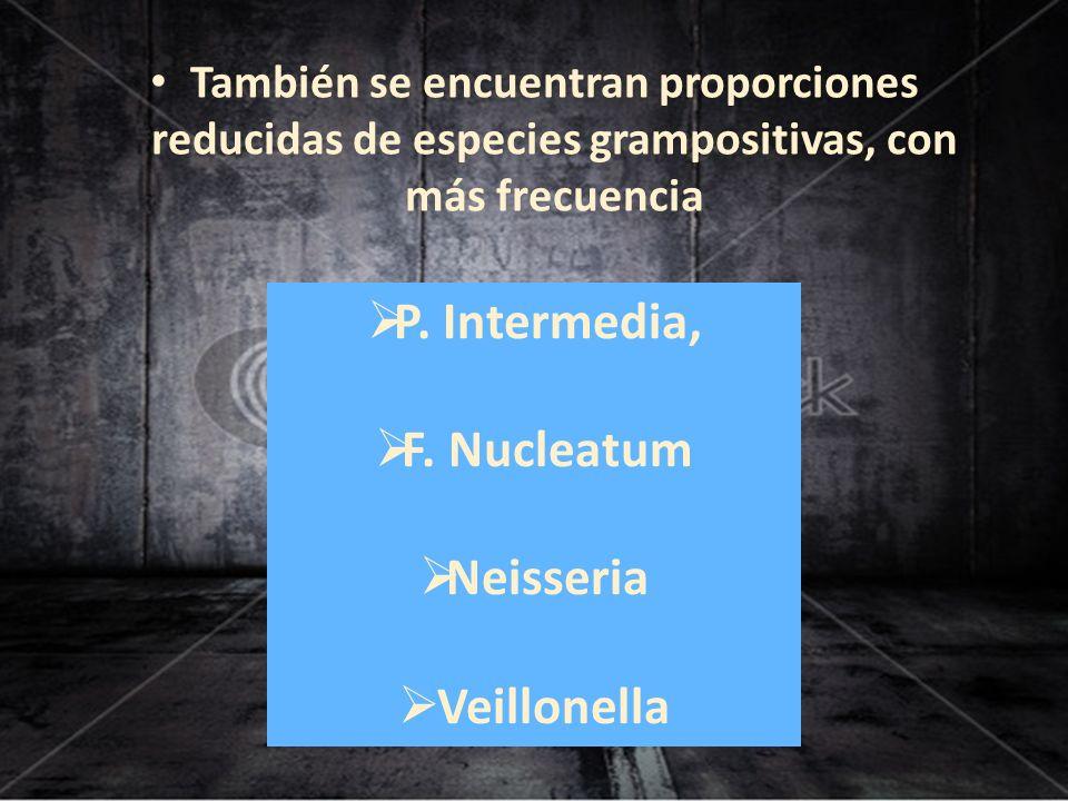 También se encuentran proporciones reducidas de especies grampositivas, con más frecuencia P. Intermedia, F. Nucleatum Neisseria Veillonella