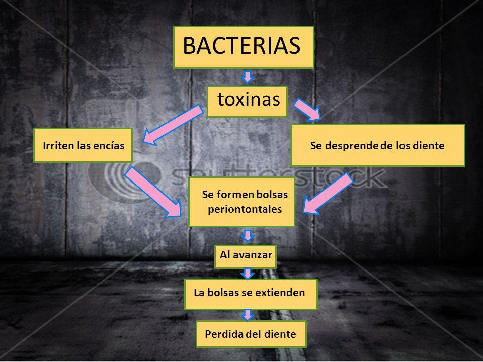 BACTERIAS toxinas Irriten las encíasSe desprende de los diente Se formen bolsas periontontales Al avanzar La bolsas se extienden Perdida del diente
