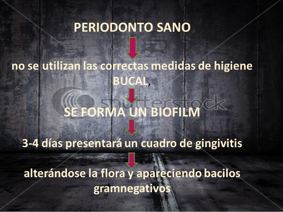 PERIODONTO SANO no se utilizan las correctas medidas de higiene BUCAL, SE FORMA UN BIOFILM 3-4 días presentará un cuadro de gingivitis alterándose la