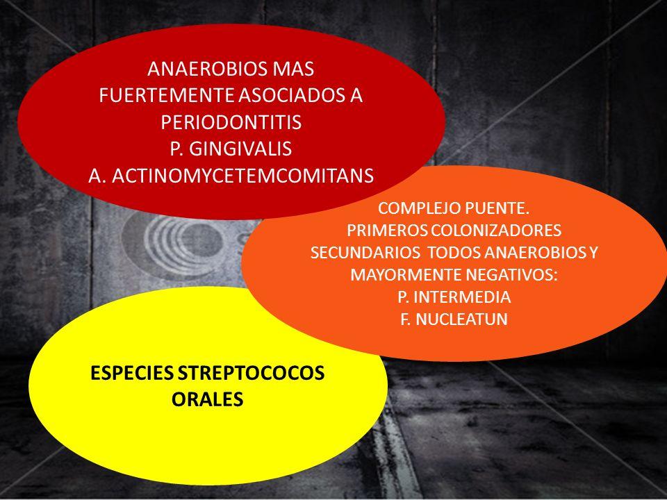 ESPECIES STREPTOCOCOS ORALES COMPLEJO PUENTE. PRIMEROS COLONIZADORES SECUNDARIOS TODOS ANAEROBIOS Y MAYORMENTE NEGATIVOS: P. INTERMEDIA F. NUCLEATUN A