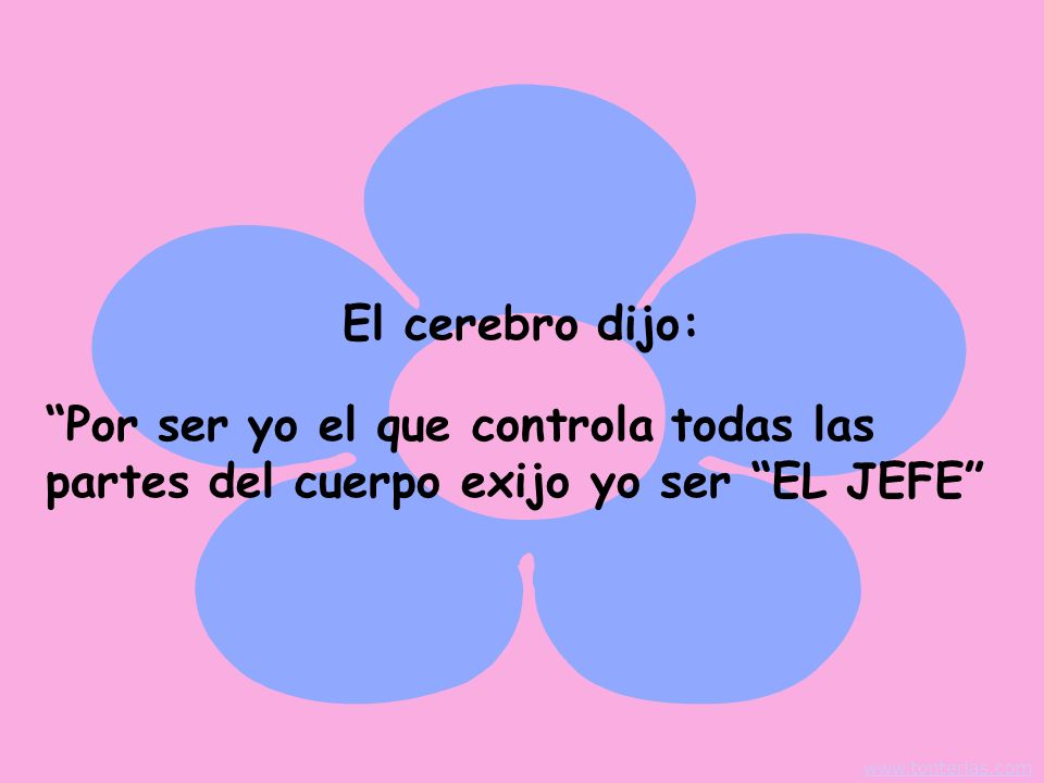 Por ser yo el que controla todas las partes del cuerpo exijo yo ser EL JEFE El cerebro dijo: www.tonterias.com