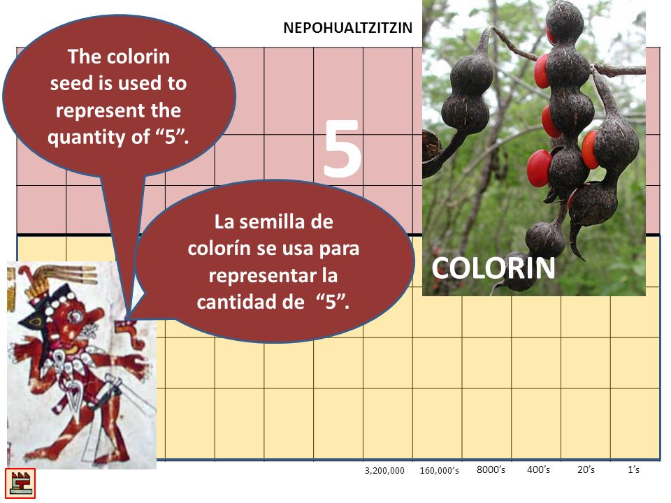 NEPOHUALTZITZIN 1s20s400s8000s 3,200,000160,000s RegroupingReagrupando Four colorin are traded for a corn kernel in the twenties section.
