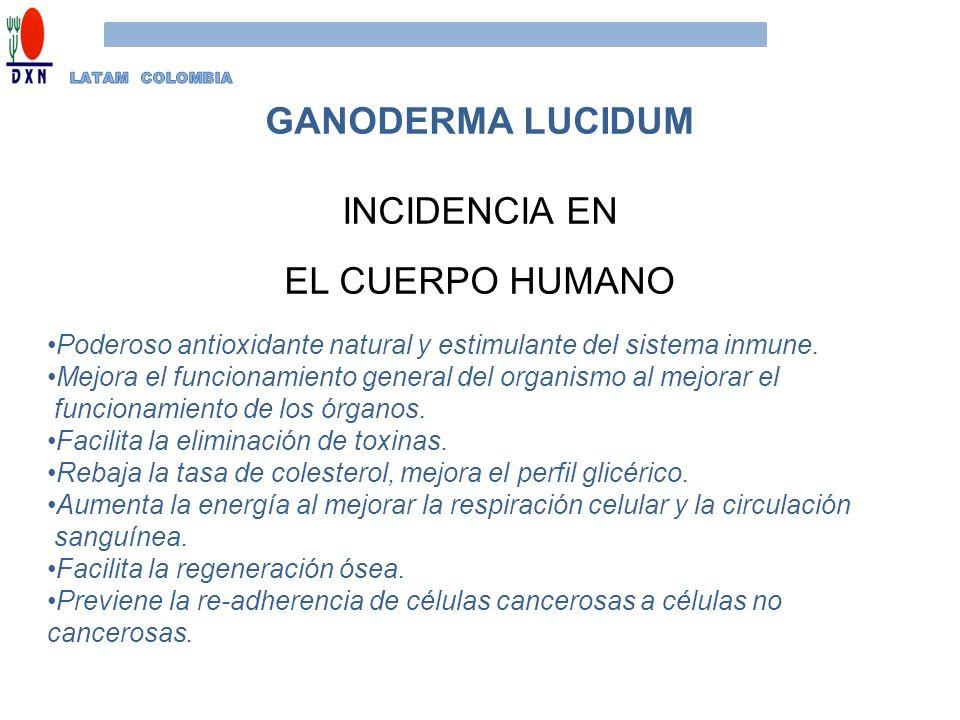 GANODERMA LUCIDUM INCIDENCIA EN EL CUERPO HUMANO Poderoso antioxidante natural y estimulante del sistema inmune. Mejora el funcionamiento general del
