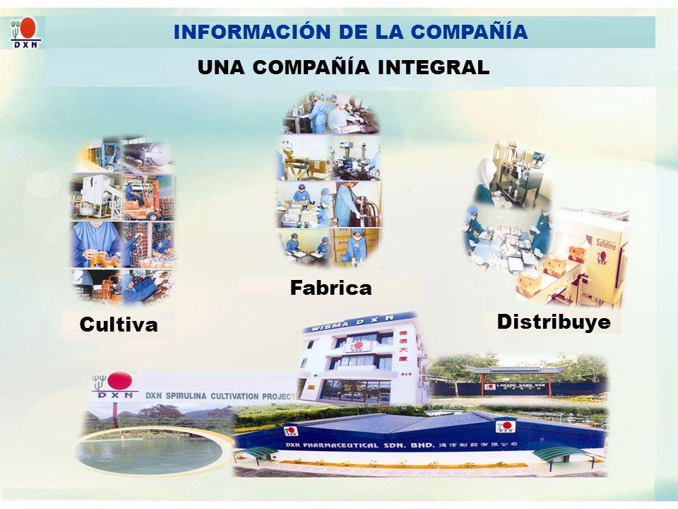 AN INTEGRATED COMPANY INFORMACIÓN DE LA COMPAÑÍA UNA COMPAÑÍA INTEGRAL Cultiva Fabrica Distribuye
