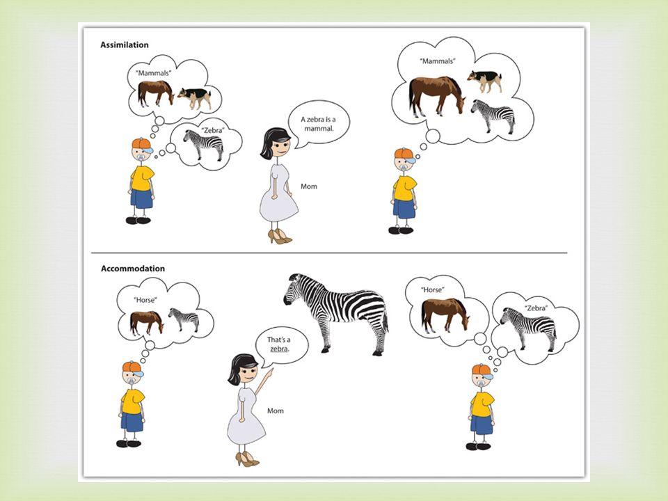 La interacción con el ambiente físico es critico para el desarrollo cognoscitivo.