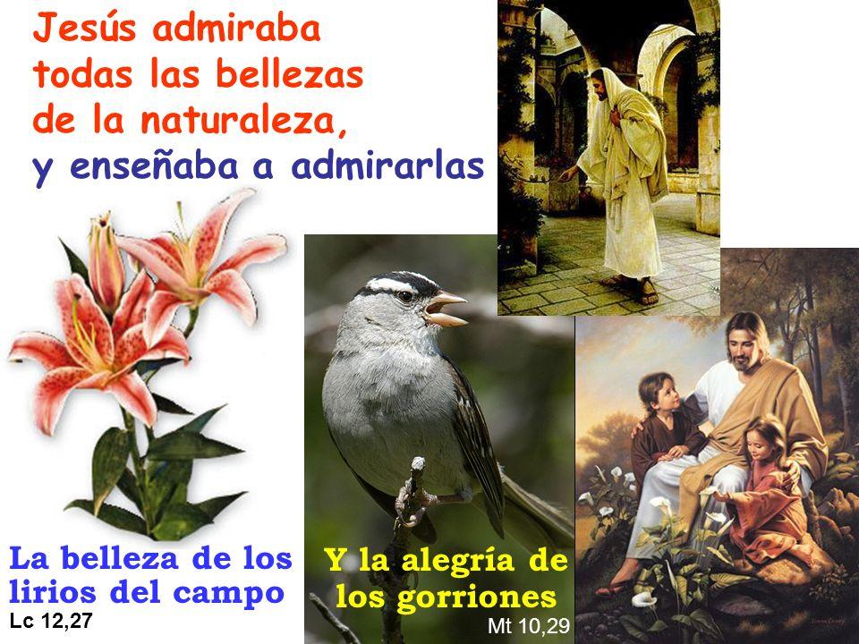 Jesús admiraba todas las bellezas de la naturaleza, y enseñaba a admirarlas La belleza de los lirios del campo Lc 12,27 Y la alegría de los gorriones