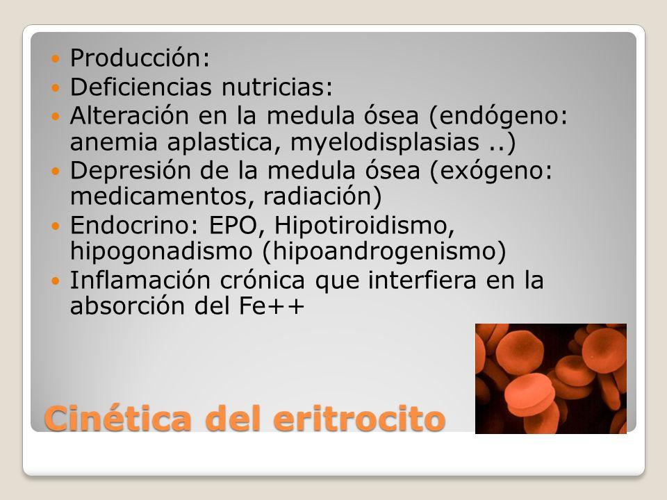 Cinética del eritrocito Producción: Deficiencias nutricias: Alteración en la medula ósea (endógeno: anemia aplastica, myelodisplasias..) Depresión de