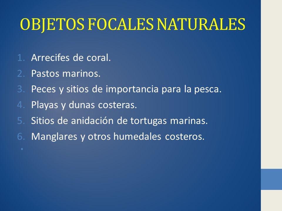 OBJETOS FOCALES NATURALES 1.Arrecifes de coral.2.Pastos marinos.