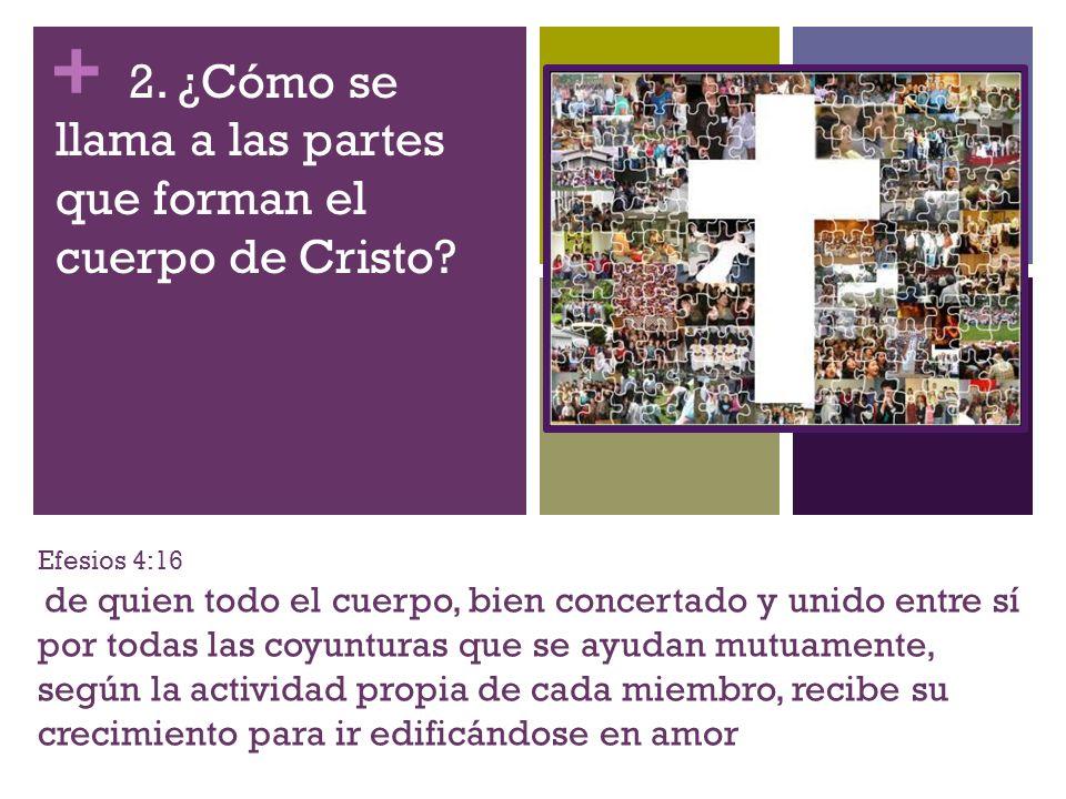 + Efesios 4:16 de quien todo el cuerpo, bien concertado y unido entre sí por todas las coyunturas que se ayudan mutuamente, según la actividad propia