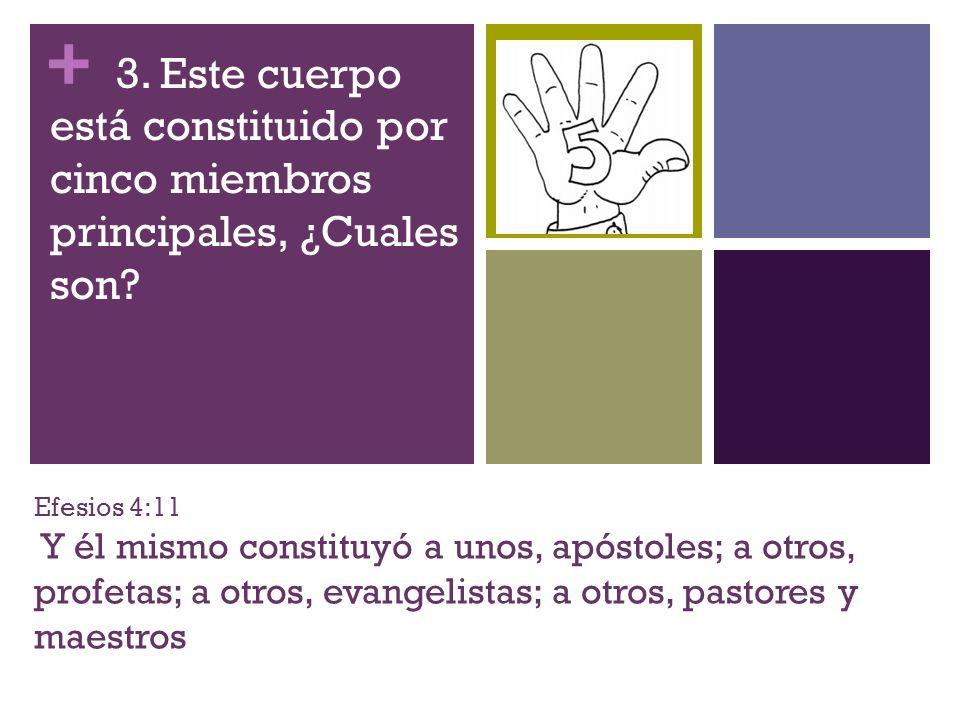 + Efesios 4:11 Y él mismo constituyó a unos, apóstoles; a otros, profetas; a otros, evangelistas; a otros, pastores y maestros 3. Este cuerpo está con