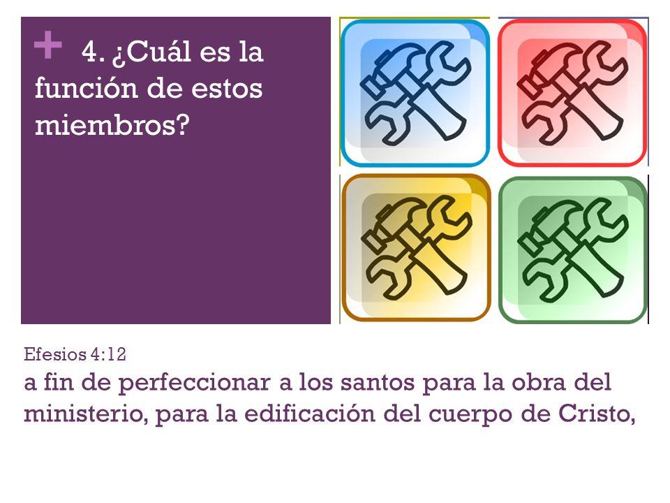 + Efesios 4:12 a fin de perfeccionar a los santos para la obra del ministerio, para la edificación del cuerpo de Cristo, 4. ¿Cuál es la función de est