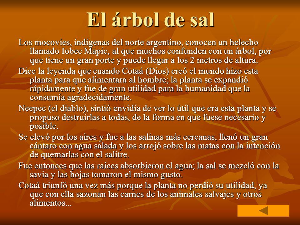 El árbol de sal Los mocovíes, indígenas del norte argentino, conocen un helecho llamado Iobec Mapic, al que muchos confunden con un árbol, por que tie