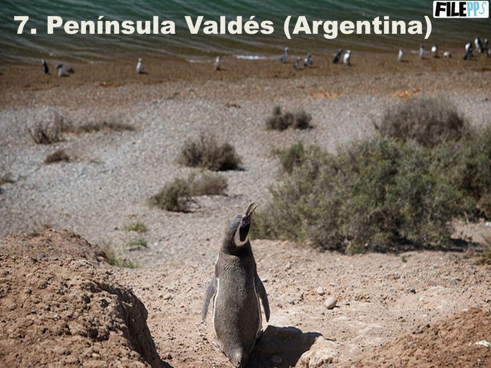 6. El Lago Nahuel Huapi + El Bosque de Arrayanes (Argentina)