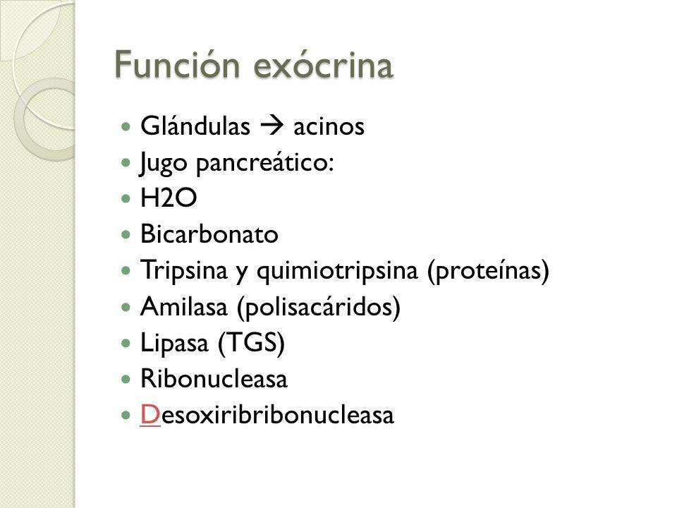 Función exócrina Glándulas acinos Jugo pancreático: H2O Bicarbonato Tripsina y quimiotripsina (proteínas) Amilasa (polisacáridos) Lipasa (TGS) Ribonuc