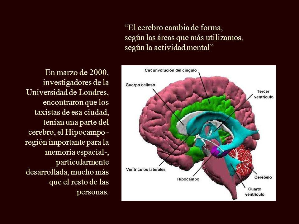 Durante muchos años se creyó que a partir de cierta edad, la dotación de neuronas ya no se renovaba más.