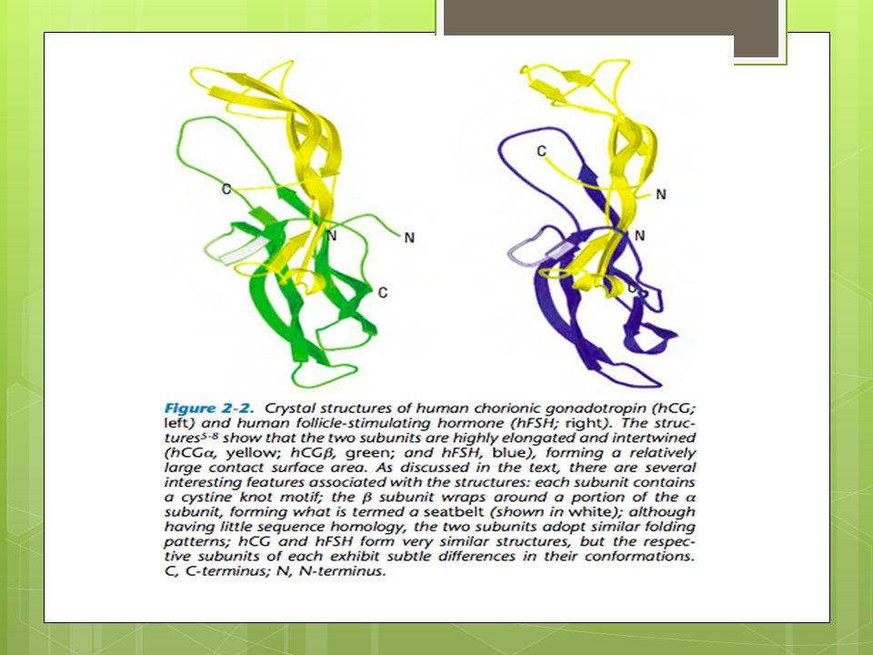 α FSH-h + β ( HGC + FSH-h) Elonova ® MSD.Receptor FSH : in vitro 1.