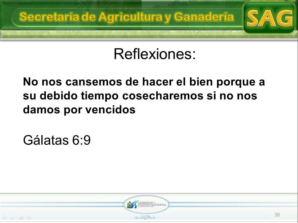 38 Reflexiones: No nos cansemos de hacer el bien porque a su debido tiempo cosecharemos si no nos damos por vencidos Gálatas 6:9