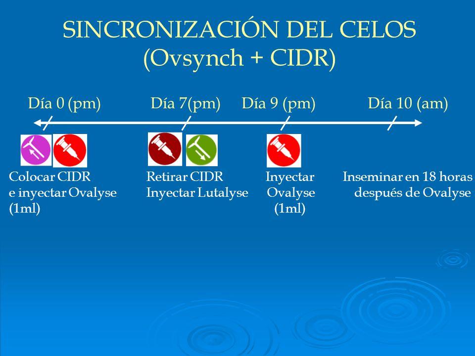 Día 0(pm) Día 7(pm) Día 9 (pm) Día 10 (am) Colocar CIDR Retirar CIDR Inyectar Inseminar en 18 horas e inyectar Ovalyse Inyectar Lutalyse Ovalyse despu