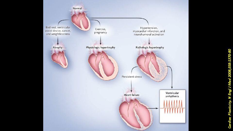 Cardiac Plasticity. N Engl J Med 2008;358:1370-80