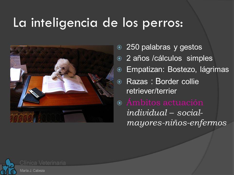 Habilidades de la IE: Son innatas y adquiridas, y constituyen la materia prima de la inteligencia interpersonal.