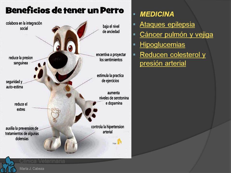 TERAPIA ANIMAL: Co - Terapeutas BENEF.PERSONAS MAYORES BENEF.