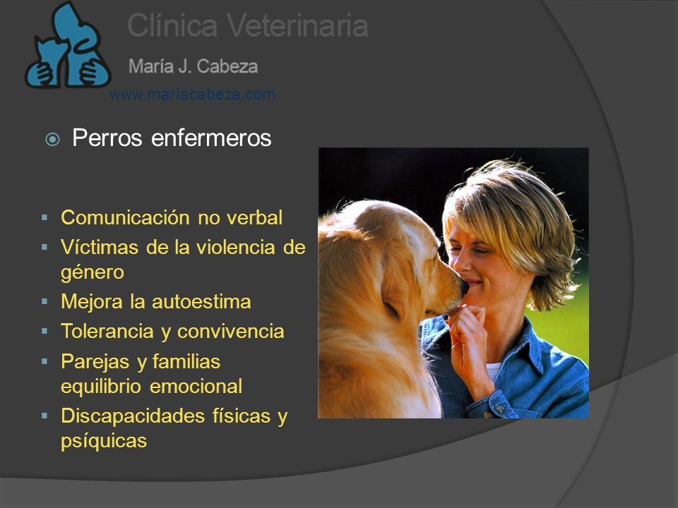 Aplicaciones de la terapia asistida con animales: Delfines Perros Hipoterapia Área cognoscitiva Área de comunicación Área psicomotora