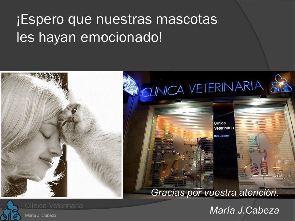 www.mariacabeza.com Hipo-terapia Nivel cognoscitivo Comunicativo Personalidad