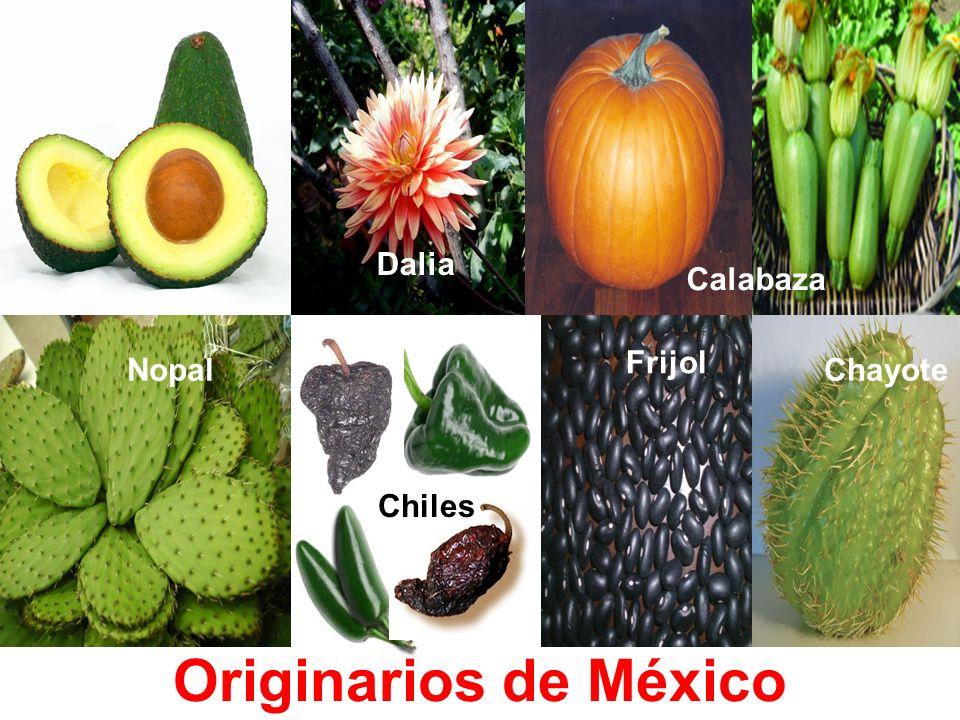 Vainilla Maíz Cacao Jitomate (*) Tequila Originarios de México Flor de Nochebuena Pecanas Epazote
